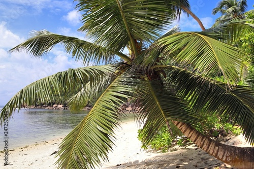 Fotografering Beautiful palm trees at the beach on the paradise islands Seychelles