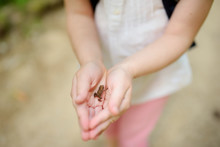 Adorable Girl Catching Little Babyfrogs On Beautiful Summer Day In Forest