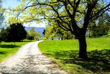 Gravel Path Between Trees Along Side Lake Hawea