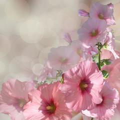 bouquet pink florals on grey background