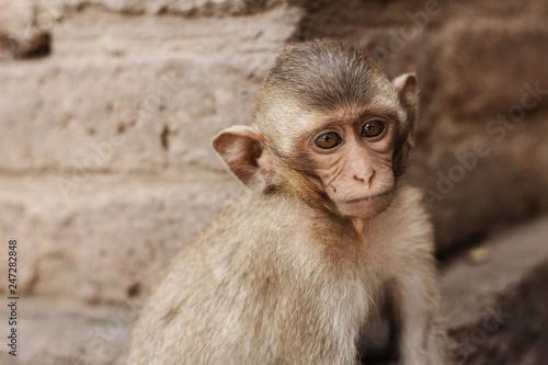 In de dag Young of monkey in zoo.