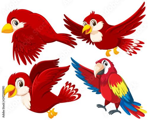 Set of red bird Canvas Print