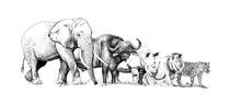 Big African Five Animal. Hand Drawn Illustration