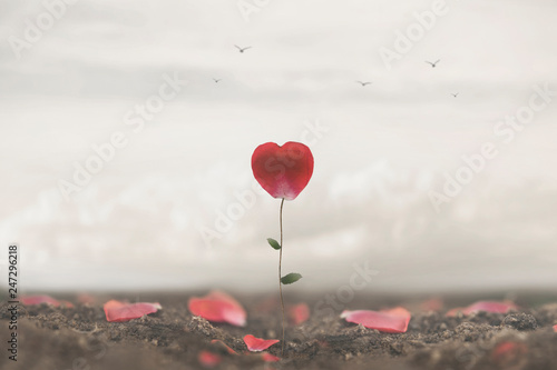 Fotomural romantic flower made to heart symbol of love and freedom