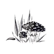 Mushrooms Sketch, Mushroom In ...