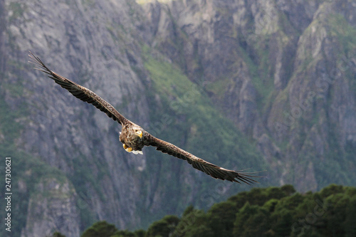 eagle on a rock Wallpaper Mural