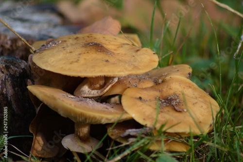 Fotografie, Obraz  Le champignon