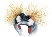 Watercolor Painting Birds In Love Crowned Crane, Kiss