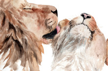 Watercolor Painting Lions Coup...