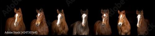 Fotografia, Obraz Foal Horse