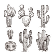 Hand Drawn Cactus. Western Des...
