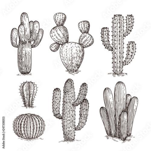 Leinwand Poster Hand drawn cactus