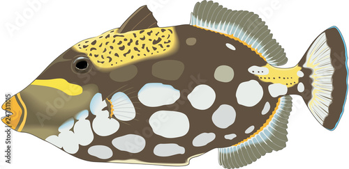 Photo  Clown Triggerfish Vector Illustration