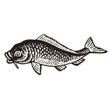 Carp Fish Hand Drawn Vector Illustration