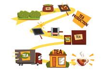 Tea Production, Tea Manufacturing Process From Plantation To Shop Cartoon Vector Illustration