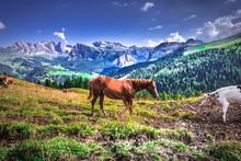 Włochy, Italia, Dolomity, Góry, Droga Chata, Szałas Piękne Miejsca, Relaks, Odpoczynek, Turystyka, Wczasy, Zwiedzanie, Krajobraz, Rowery, Górskie Wycieczki, Selle Ronda, Koń, Pastwisko