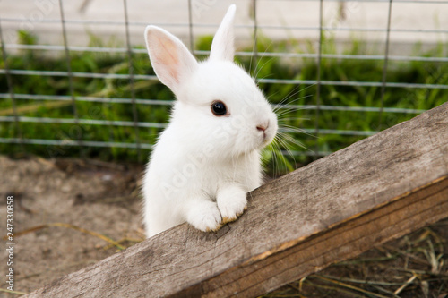 Foto little rabbit on the farm