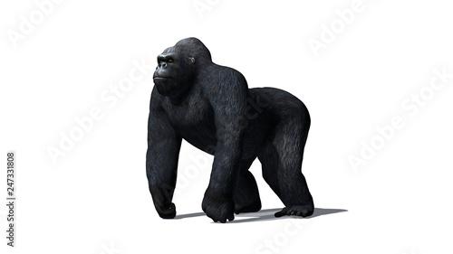 Photo  Gorilla - isolated on white background