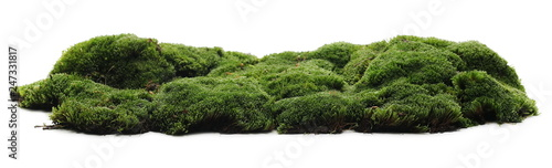 Stampa su Tela Green moss isolated on white background