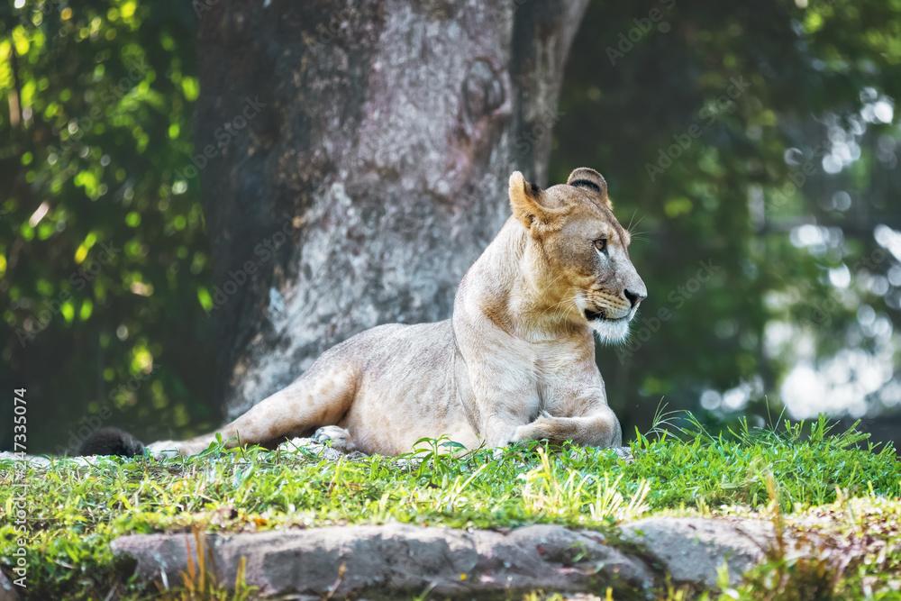 Wild animal in nature