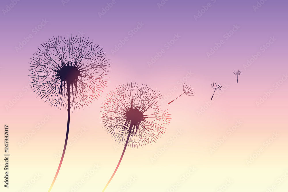 Fototapety, obrazy: dandelion silhouette at purple sunset with flying seeds vector illustration EPS10