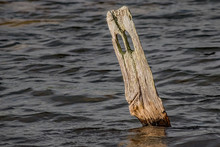 The Weathered Mooring Post In ...