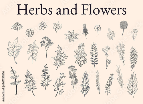 Photo  Illustration set of herbs, plants and flowers sketches
