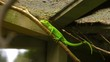 Handheld shot of green gecko sitting on tree branch in terrarium