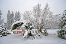 Sträucher Unter Schneelast, Kapuzinergarten, Luzern, Schweiz