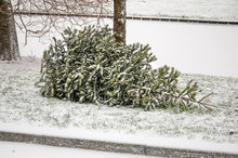Discarded Christmas Tree By The Side Of The Road During A Snow Storm In Rotterdam