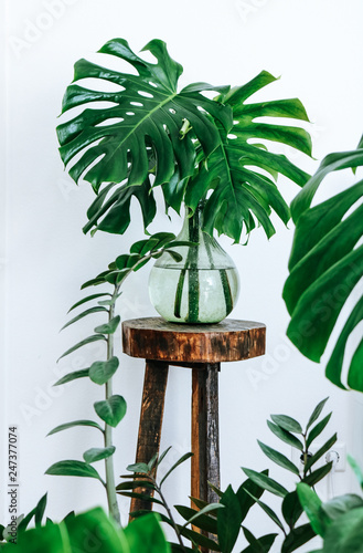 Fototapeta Urban jungle themed tropical monstera leaves in a light green glass vase on a vintage wooden plant stand surrounded by succulent plants. obraz na płótnie