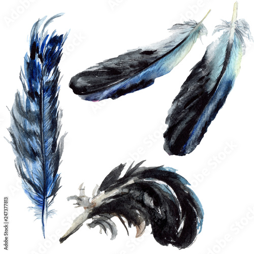 Blue black bird feather from wing isolated. Watercolor background set. Isolated feathers illustration element.