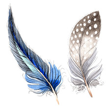 Watercolor Blue And Black Bird Feather From Wing Isolated. Isolated Feathers Illustration Element. Watercolor Background
