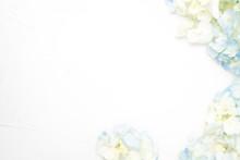Hydrangea Flower White Background Floral Flat Lay