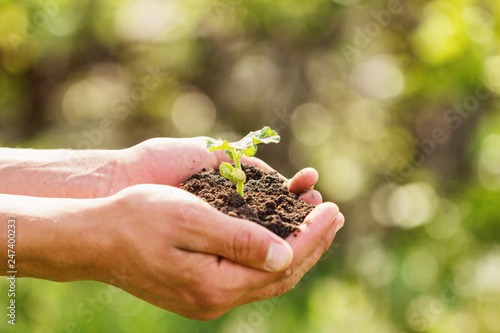 Foto  sprout in hands on a natural green background, the concept of growth and develop