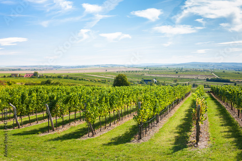 Foto  vineyard, Retz, Austria