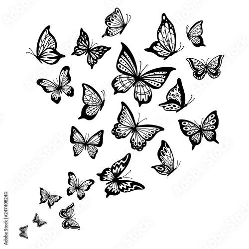 Fotografie, Obraz  Butterflies flow