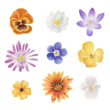 Watercolor Spring Flowers Isolated On A Blank Background