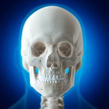 Illustration Of The Human Skull