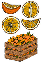 Vector Illustration Set Of Sketch Hand Drawn Wooden Box Full Of Oranges With Green Leaves And Slice Orange. Fresh Fruits, Citrus, Italy, Spain, Mandarins. Organic Food Label. Vintage Style.