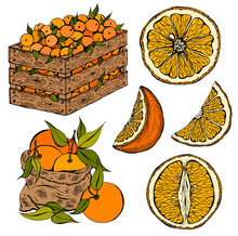 Vector Illustration Set Of Sketch Hand Drawn Wooden Box And Bag Full Of Oranges With Green Leaves, Slice Orange. Fresh Fruits, Citrus, Italy, Spain, Mandarins. Organic Food Label. Vintage Style.