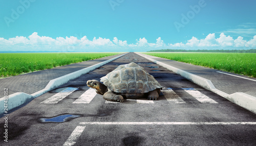 turtle crossing asphalt road.
