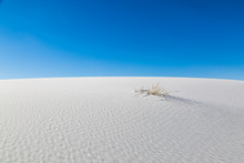 Grass Growing Through The Sand, In White Sands National Monument, New Mexico