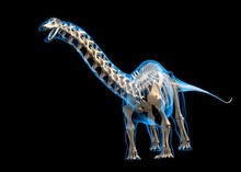 Brontosaurus Skeleton, Illustr...