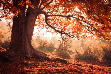 Autumn beauty tree with vibrant color and copy space