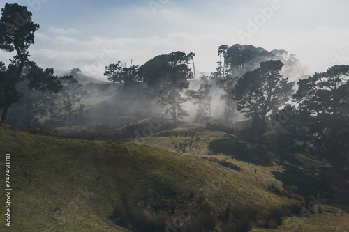 Fototapeta  foggy Pine Forest in Hobbiton, New Zealand