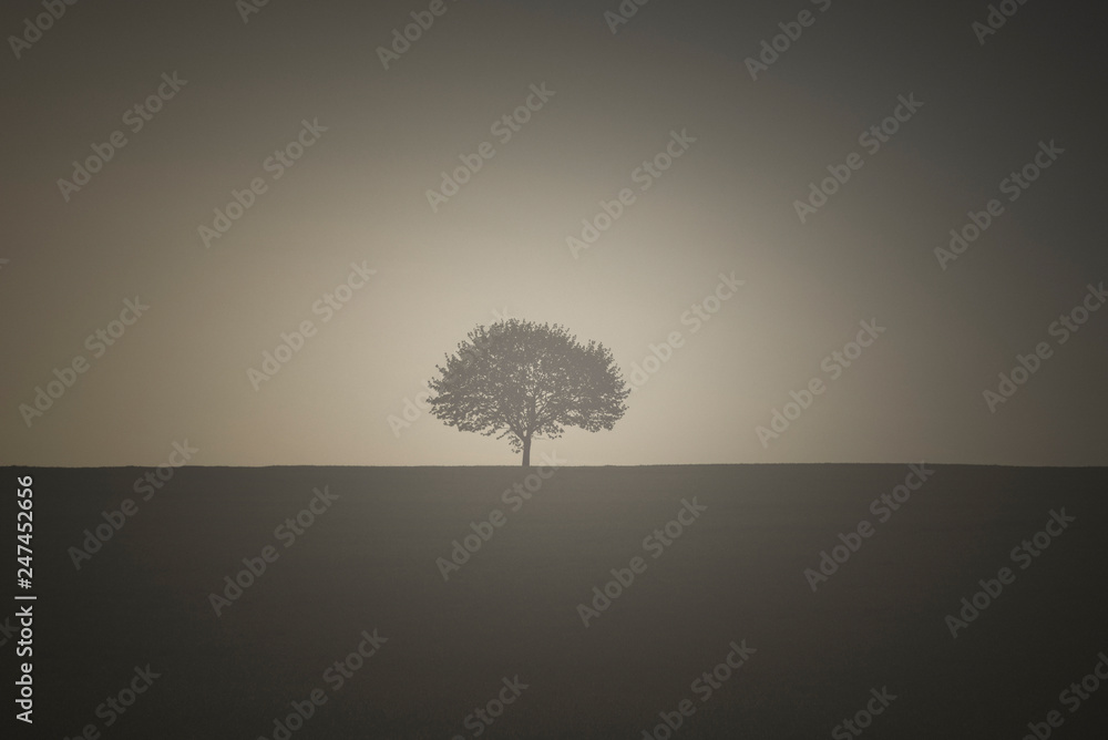 Fototapety, obrazy: Vintage image with a single tree