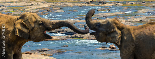 Foto  Elephant attraction river trunks