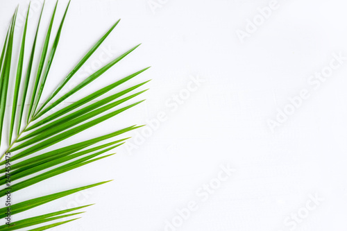 The basis for the banner with a palm leaf Canvas Print