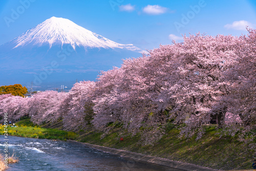 Foto op Plexiglas Kersenbloesem Ryuganbuchi in Fuji city, Shizuoka prefecture is one of popular cherry blossom & Mt.Fuji viewing spot. About 1 km Cherry blossoms line up along Sakurai river is very beautiful.